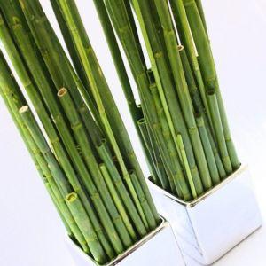 Bambus grün